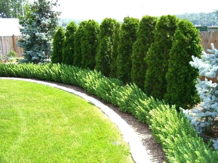 Planting Trees As A Privacy Border Has Many Benefits It Is Also Quite Obvious That Fence Doesn T Provide The Same Peaceful Aesthetic