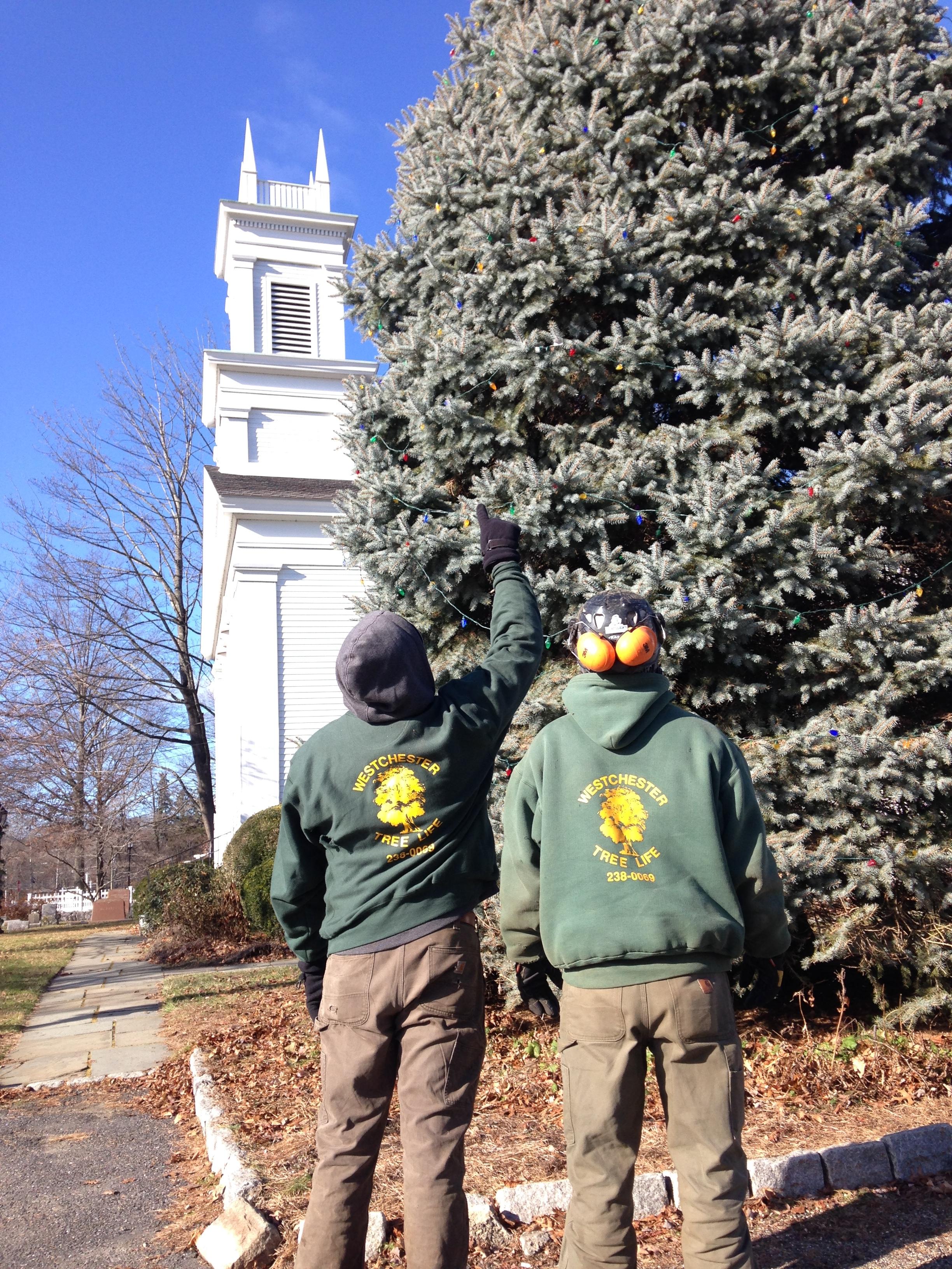 Westchester Tree Life Armonk NY